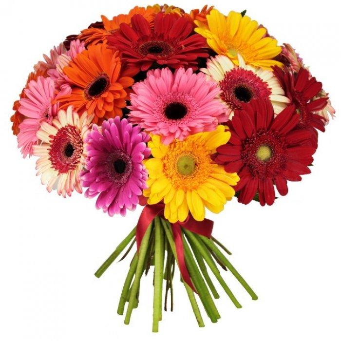 Где купить цветы герберы доставка цветов лилии санкт-петербург