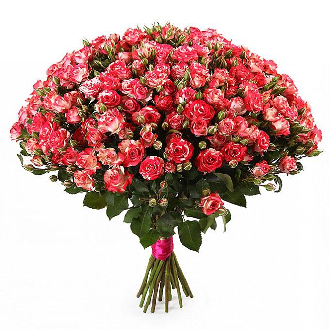 Розы кустовые купить в москве