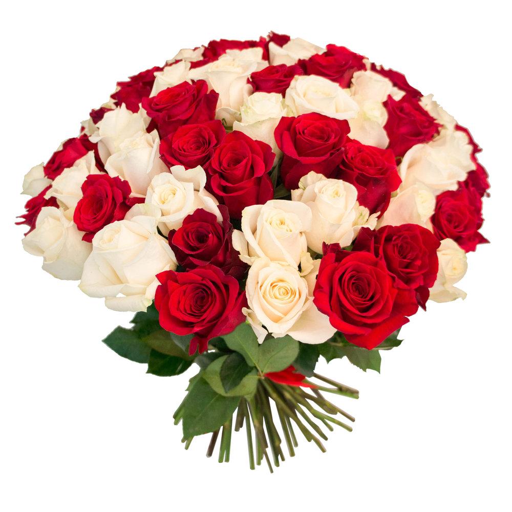 Комнатные цветы: фото и названия. Как ухаживать за 46